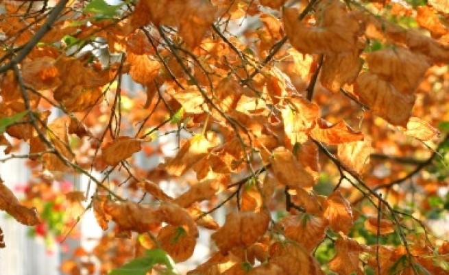 Чака ни сравнително топъл октомври