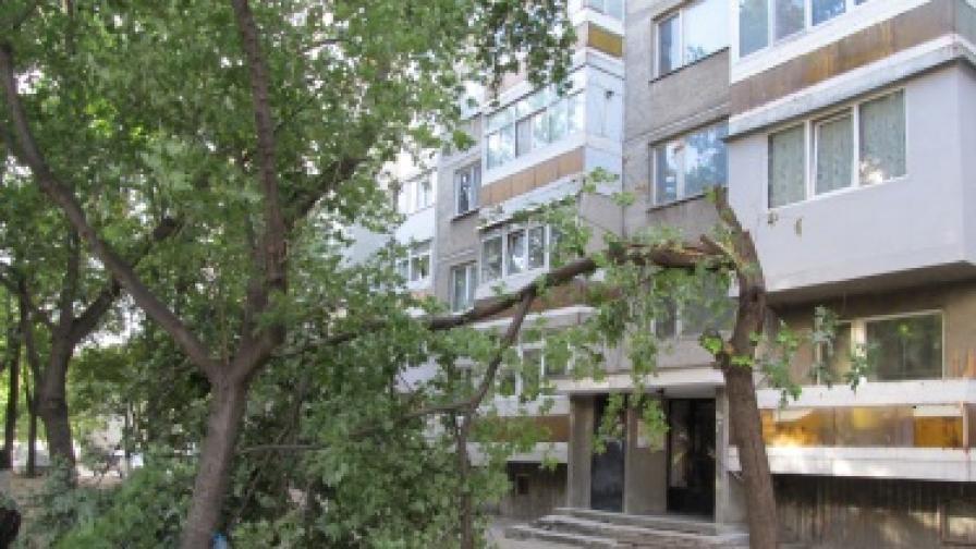 """Силният вятър в Русе прекърши тази сутрин дърво пред блок в квартал """"Възраждане"""""""