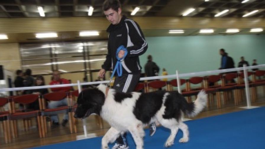 Кучето на Бойко Борисов стана световен шампион