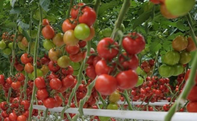 Яжте домати срещу депресия
