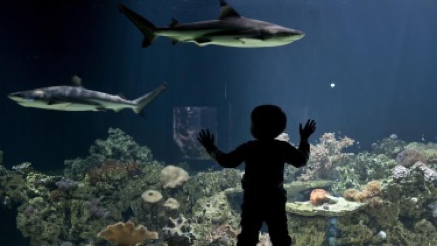 Акваpиум с акули се счупи в мол в Шанхай