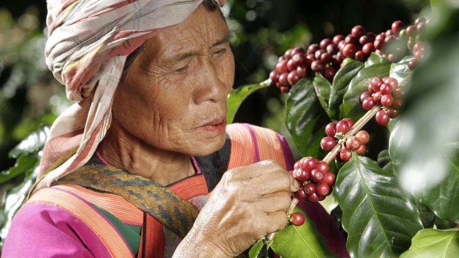 Ползите от кафето, които не знаете