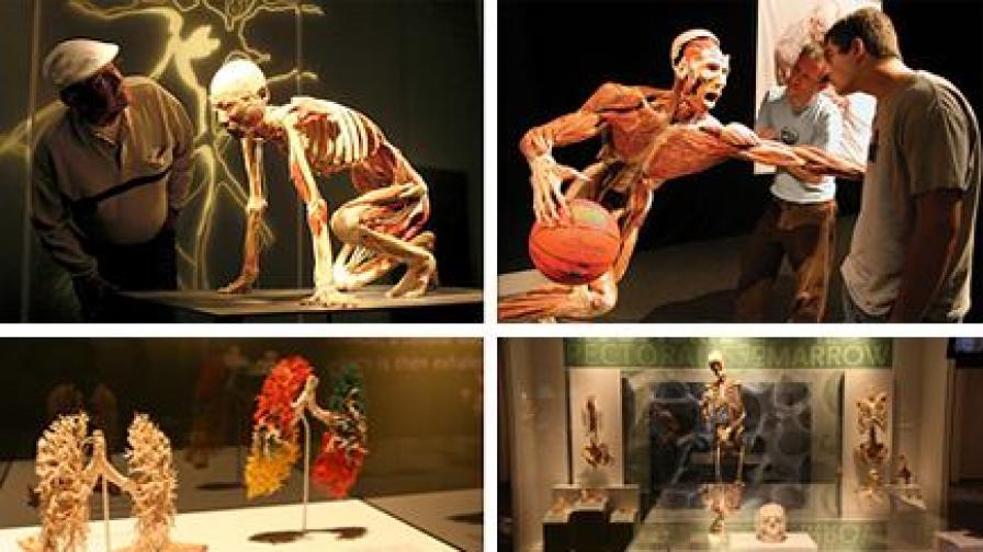"""От изложбата """"Човешкото тяло - разкрито и реално"""""""