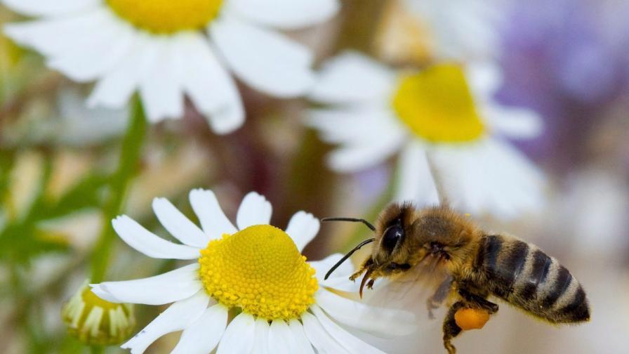 Без пчели ще умират по още 1,4 млн. души годишно