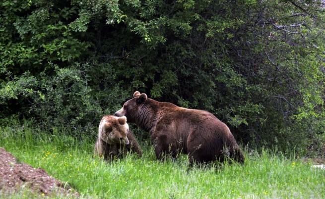 Тунел под Шипка щял да пречи на мечките