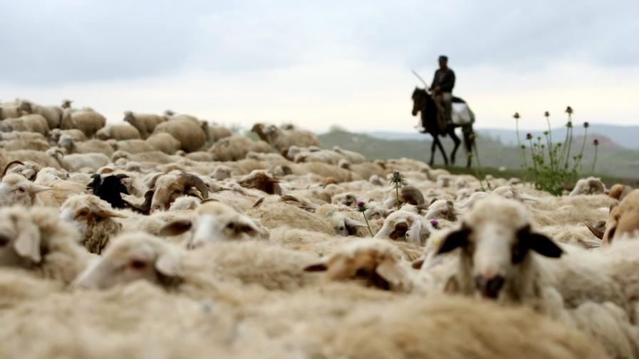 Новите граници застрашават балканските номади