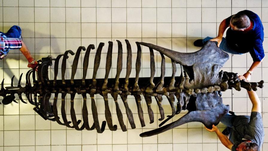 Продадоха скелет на динозавър за 400 хил. паунда