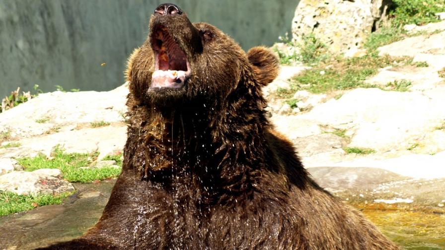 Деца нараниха мечка във варненския зоопарк с флакон спрей