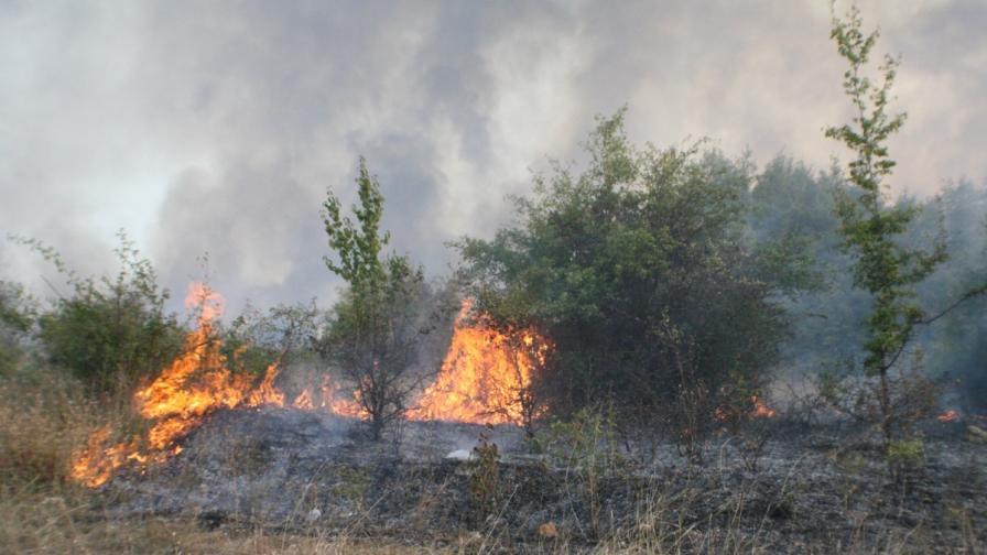Пожар край Симитли унищожи 100 дка лозя, треви и храсти
