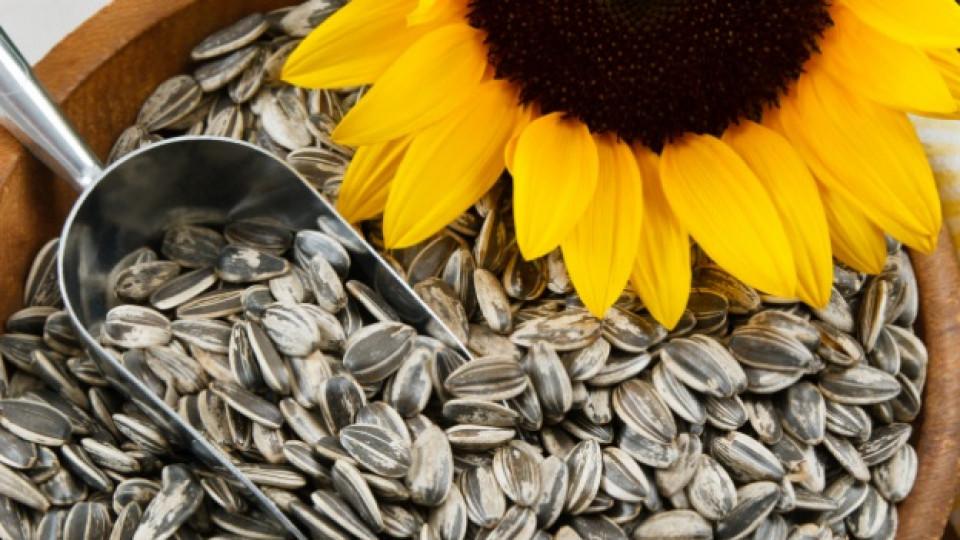 Слънчогледовите семки са богати на витамин C и Е, а също и на фибри