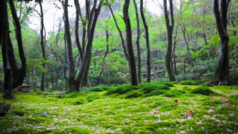 гора поляна природа