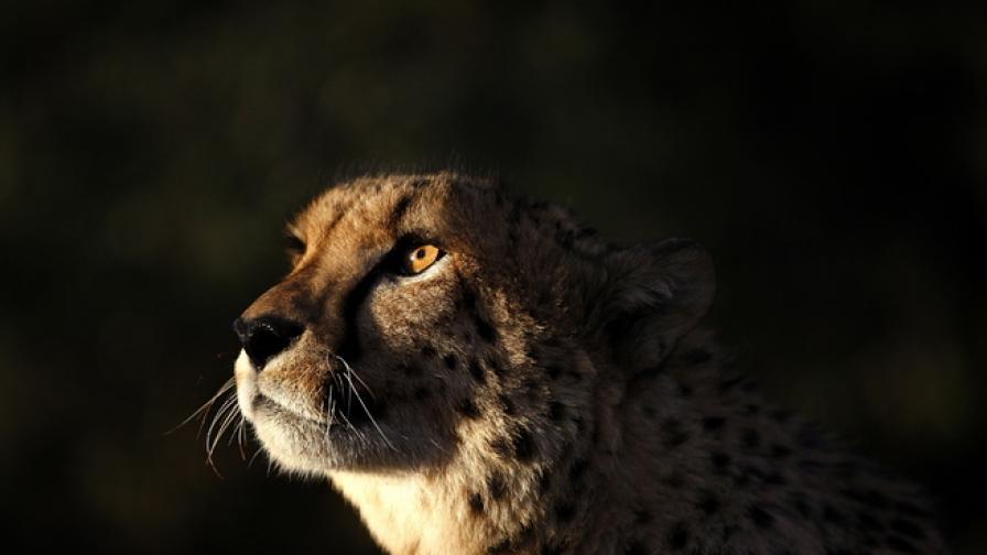 Мълнии удариха резерват за гепарди в Намибия,
