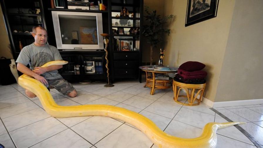 Масаж със змии освобождава от стреса