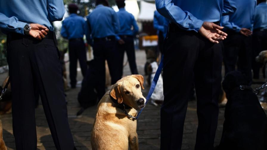 Учени: Европейците са опитомили кучетата