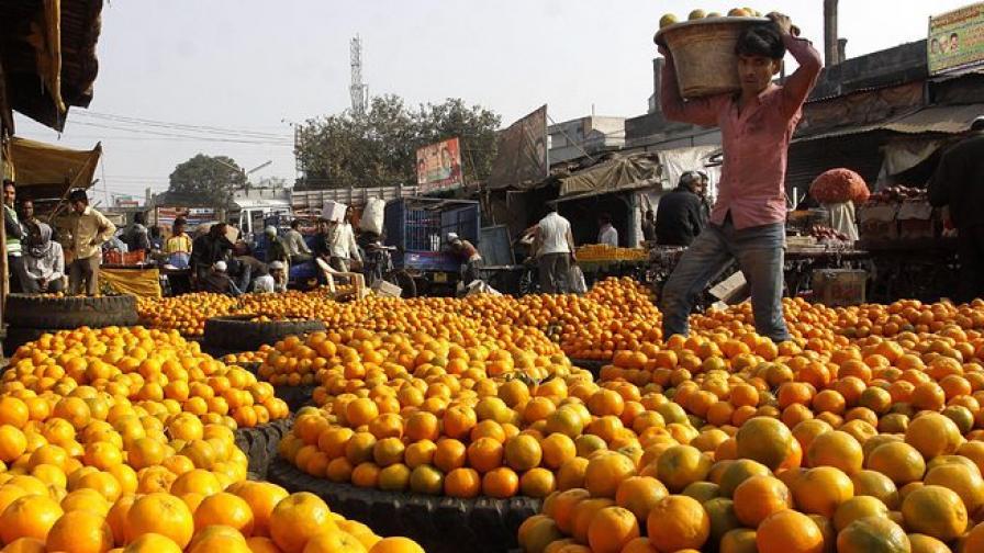 ЕС  спира вноса на цитрусови плодове от Южна Африка