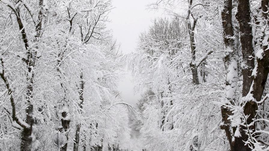 НИМХ: Зимата в България тепърва предстои
