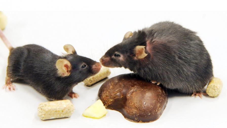 Осъдиха германка за жестоко убийство на мишки
